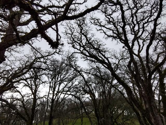 Trees, trees everywhere
