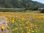 2014 Spring Wildflowers