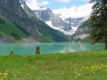 banff lake louise wildflowers