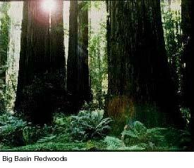 bb trees