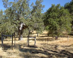 Los Padres National Forest, fenceline