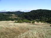 Click to enlarge - Montebello Open Space Preserve, looking from the start toward the finish (2004)